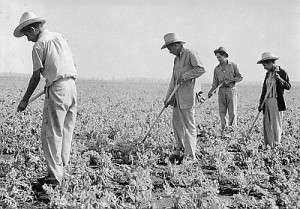 Farmworkers near Hanford